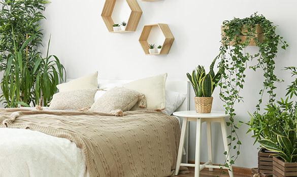 Plants in Bedrooms